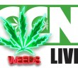 cannabis-culture-news-live-weed-biggest
