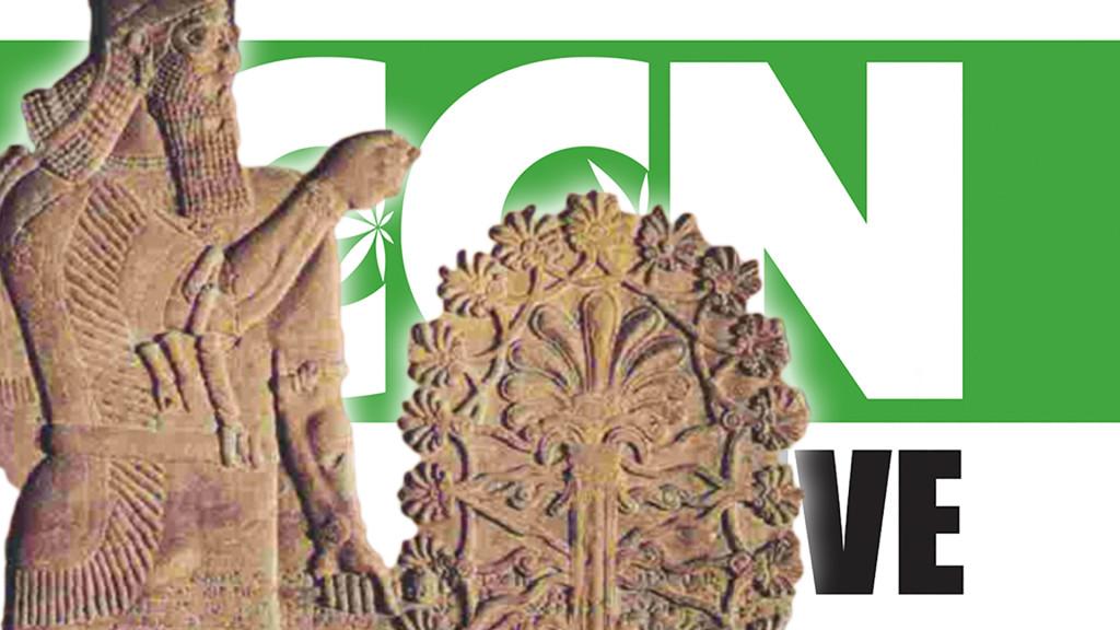 ccn-live-history-cannabis