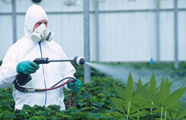 pestiside weed