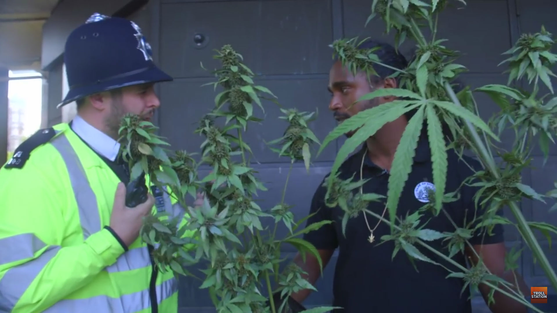 Pot TV | Marijuana Video		Cannabis Plants In Public With Black the Ripper