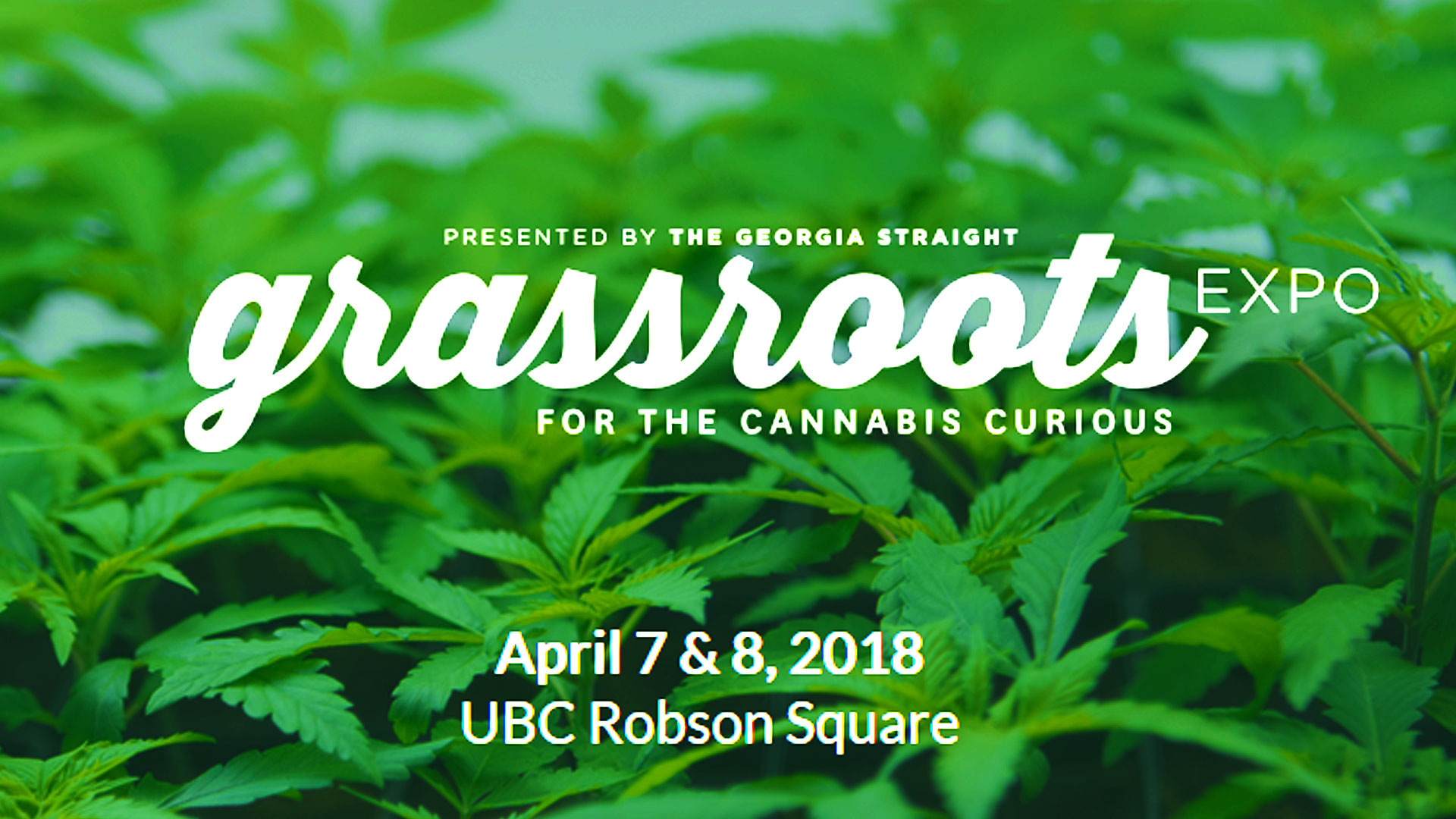 Grassroots Highlights: The History of Cannabis Activism in